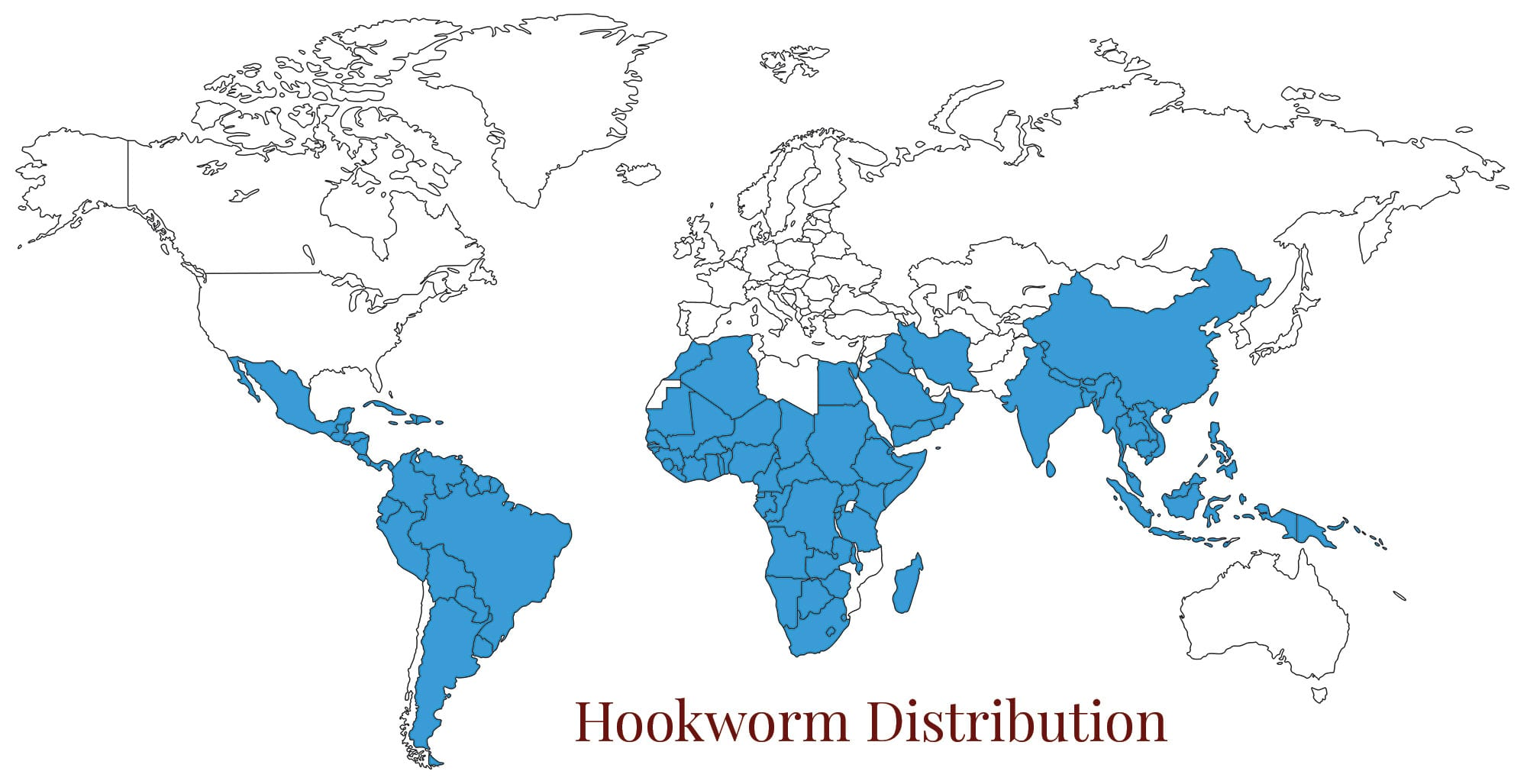 World map hookworm